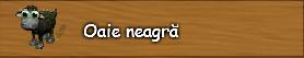 2. Oaie neagra.png