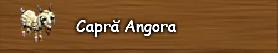 3. Capra angora.png