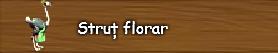 4. Strut florar.png