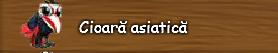 6. Cioara asiatica.png