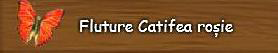 Fluture-Catifea-rosie.png