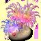 incubator_coral_softcoral-big.png