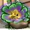 incubator_flora_3-big.png
