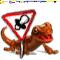 Originea salamandrelor.png