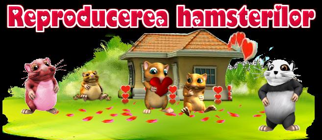 Titlu hamsteri.png