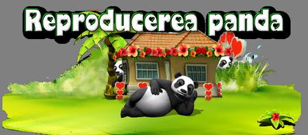 Titlu panda.png