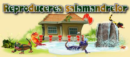 Titlu salamandre.png