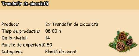 Trandafir de ciocolata 8 ore.png